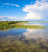 Summer lake panorama. — Stock Photo
