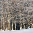 First winter snow and mountain beech forest — Stock Photo