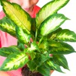 Girl with houseplant — Stock Photo #5038905