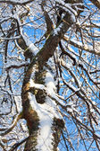Winter twigs and blue sky — Stock Photo
