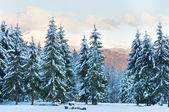 Paisagem de montanha do sol de inverno — Foto Stock