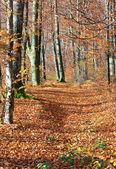 осенний лес горы — Стоковое фото