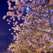 Stock Photo: Night urbview with japanese cherry blossom