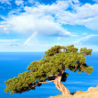 Juniper tree, sea and rainbow - Stock Photo