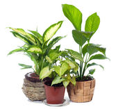 Group of window plant — Stock Photo