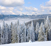 Winter mountain landscape — Photo