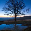 Stock Photo: Lonely autumn naked tree on night mountain hill top