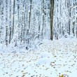 First winter snow and last autumn leafs in forest - Stock Photo