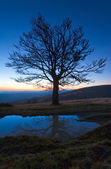 Lonely autumn naked tree on night mountain hill top — Stock Photo