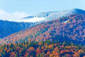 Otoño bosque de la montaña — Foto de Stock