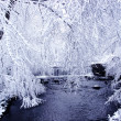 Snow covered river — Stock Photo #4414454