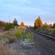 Idaho Tracks — Stock Photo #4506307