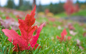 Autum Maple Leaves — Stock Photo