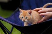 Curious Kitten — Stock Photo