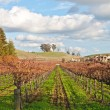 Stock Photo: Vinyard and winery