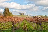 Vinyard a vinařství — Stock fotografie
