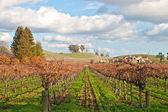 Vinyard and winery — Stockfoto