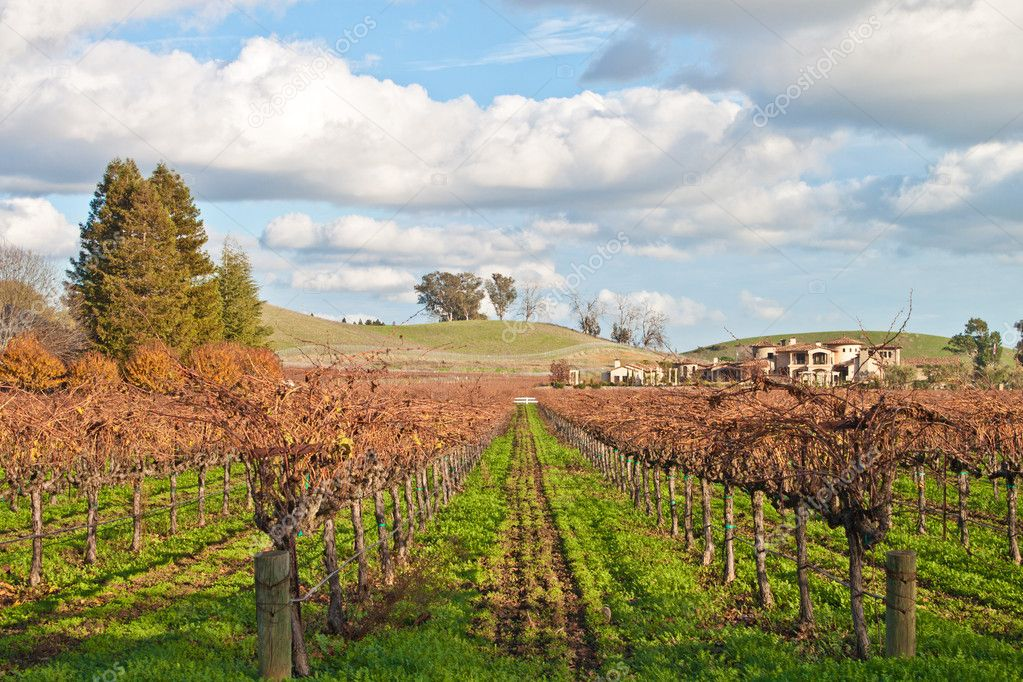 Driving arround Napa Valley in California, there are some spectacular views of some of the best vineyards and wineries in the country — Stock Photo #4577065