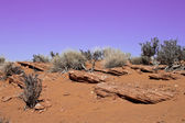 Cena do deserto — Foto Stock