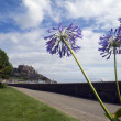 Exotic flowers frame Mount Orgueil castle on Jersey - Stock Photo