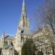 Stock Photo: Salisbury Cathedral and trees