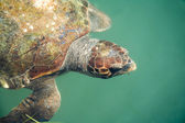 Giant sea turtle — Stock Photo