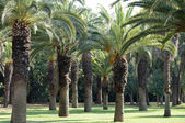 Palm trees. — Stock Photo