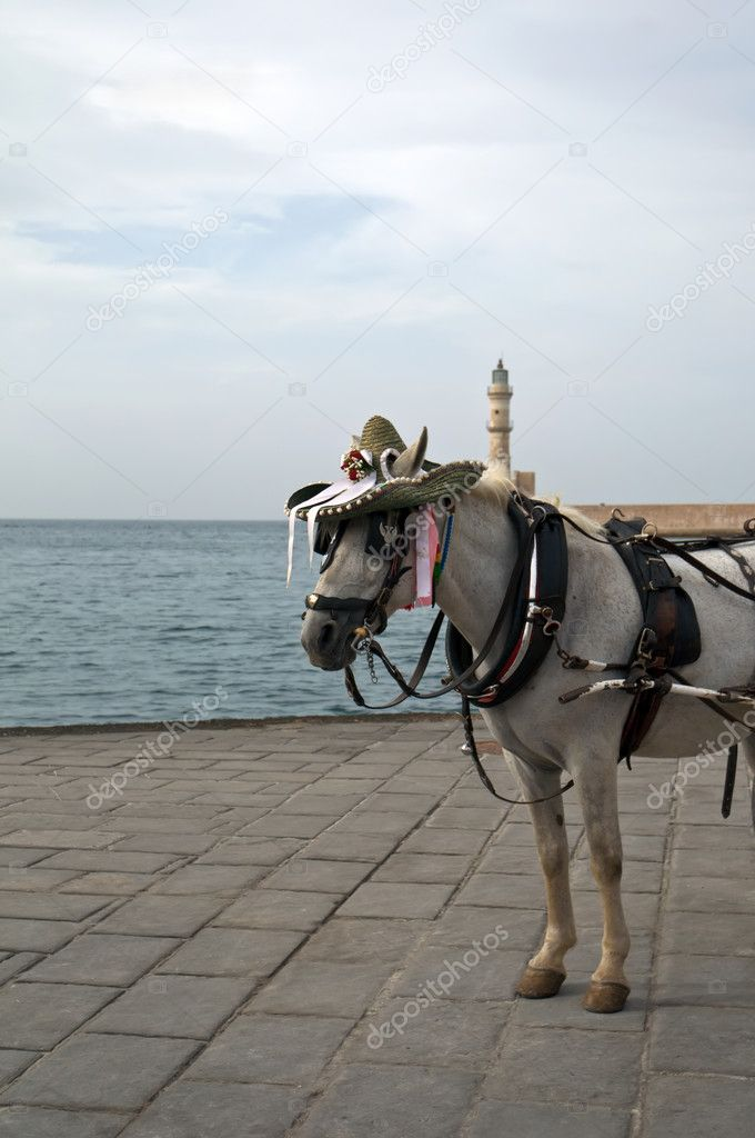 Traditional Horse and Cart on quay of city of island Crete, Greece .  Stock Photo #4546388