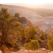 Nature of Israel . — Stock Photo #4622335