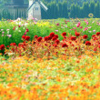 Windmill netherlands style in beautiful flower garden : vineyard — Stock Photo #4484912