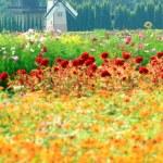 Windmill netherlands style in beautiful flower garden : vineyard — Stock Photo