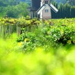 Windmill netherlands style in beautiful flower garden : vineyard — Stock Photo #4484953