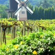 Windmill netherlands style in beautiful flower garden : vineyard — Stock Photo #4484997
