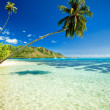 Palm tree hanging over stunning lagoon — Stock Photo