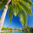 Stock Photo: Palm tree hanging over stunning lagoon