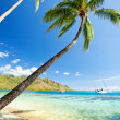 Stock Photo: Palm tree hanging over stunning lagoon with sky