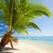 Stock Photo: Small palm tree hanging over stunning lagoon
