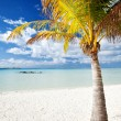 Palm tree on a deserted tropical beach - Stock Photo