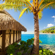 Tropical bungalow and palm tree next to blue lagoon — Stock Photo #4474207