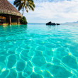 Palm tree hanging over infinity pool — Stock Photo #4474360