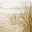 Close up of a tall grass on a beach during cloudy season — Stock Photo