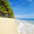 Deserted tropical beach with palm trees — Stock Photo #4475328