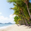Tropical beach with palm trees in north Queensland — Stock Photo