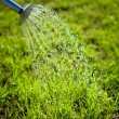 Metal watering can used to water the grass — ストック写真