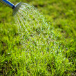 Metal watering can used to water the grass — Stock Photo
