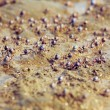 Many little crabs running on the beach - Stock Photo