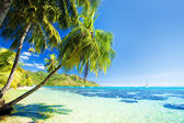 Palm tree hanging over stunning blue lagoon — Stock Photo
