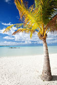 Palm tree on a deserted tropical beach — Stock Photo