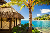 Tropical bungalow and palm tree next to blue lagoon — Stock Photo