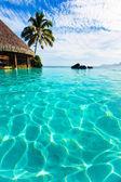 Palm tree hanging over infinity pool — Stock Photo